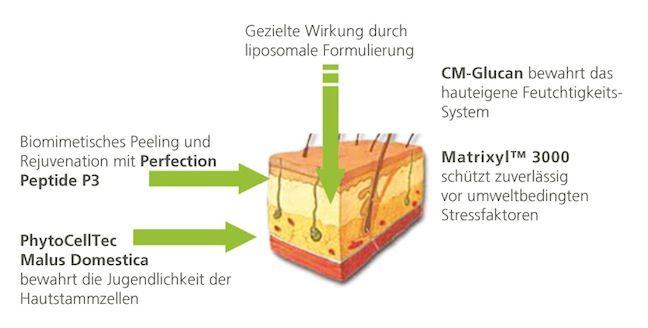 Cell Premiun Wirkung