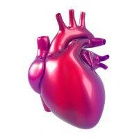 Herz/Kreislauf